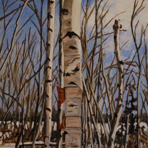 gift birch 3